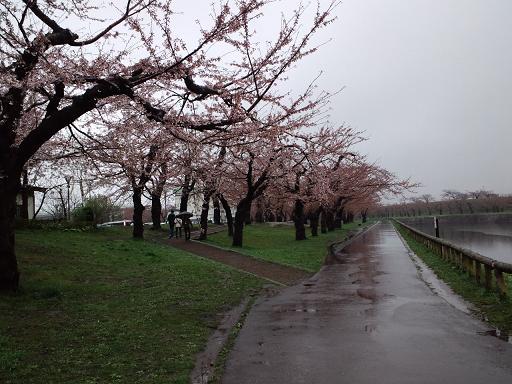 五稜郭公園.jpg