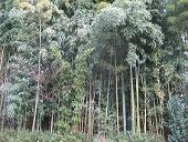 竹って北海道では見られないよね