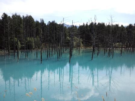 青い池2.jpg