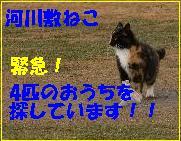 河川敷の猫バナー