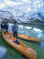 Tide Wood 桜カヌー1