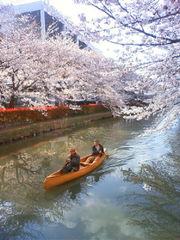 Tide Wood 桜カヌー2
