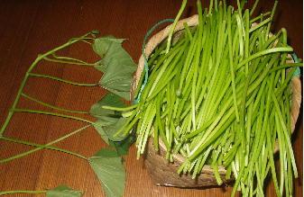 サツマイモの茎収穫