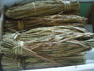 藁苞納豆発酵へ