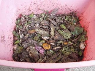 生ゴミ堆肥1