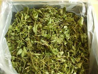 アマチャヅル茶
