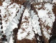 おからのココアケーキ