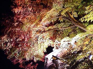 紅葉の箱根