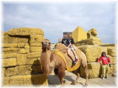 ラクダの画像 p1_14