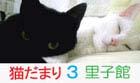 猫だまり3バナー.jpg