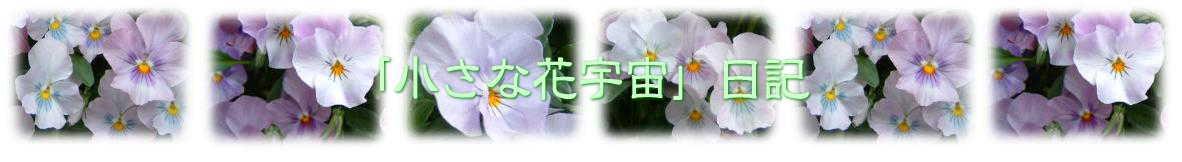 「小さな花宇宙」日記