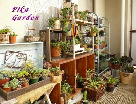 pika garden(08.04.25).JPG