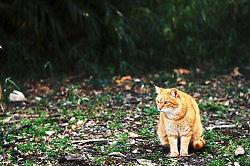 室戸岬の野良猫