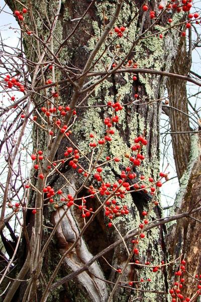 Last of the berries.jpg