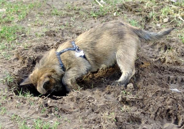 008=changun digging.jpg