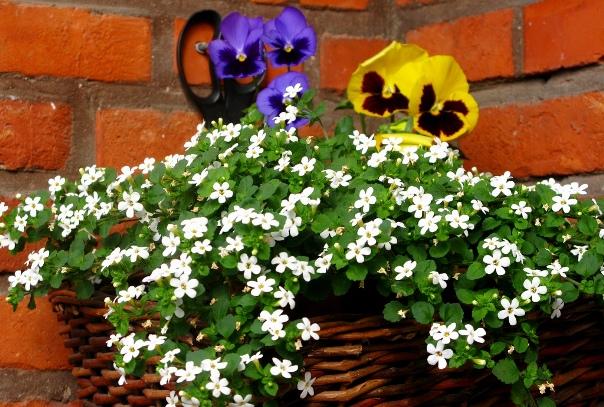 0127=it was Flowers.jpg