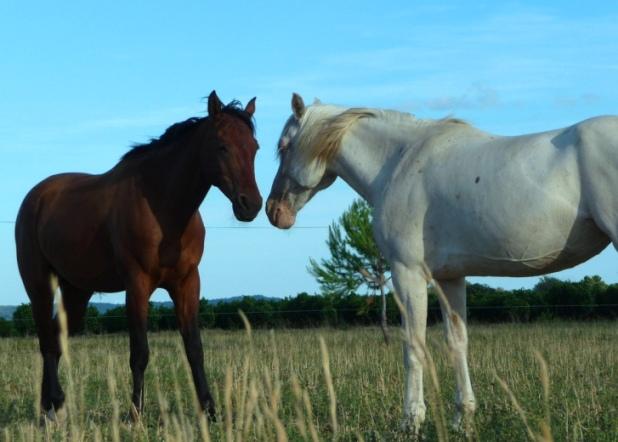 +0819 Horses.jpg
