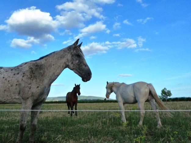 +0818 Horses trio.jpg