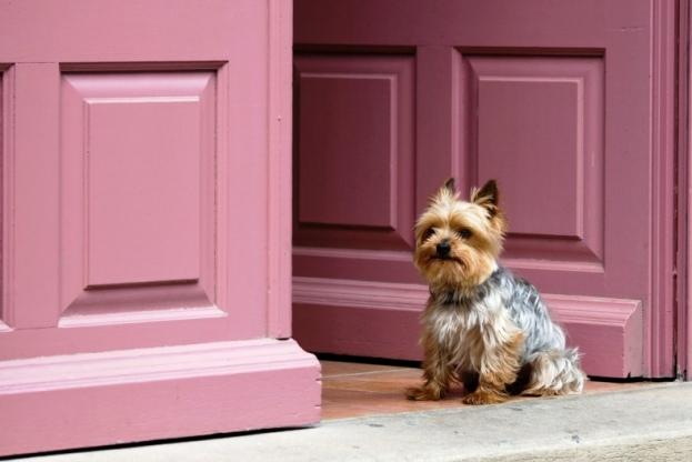 +0830 Guard Dog.jpg
