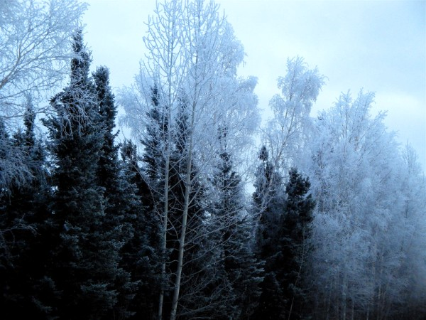 1216=Cold day101.jpg