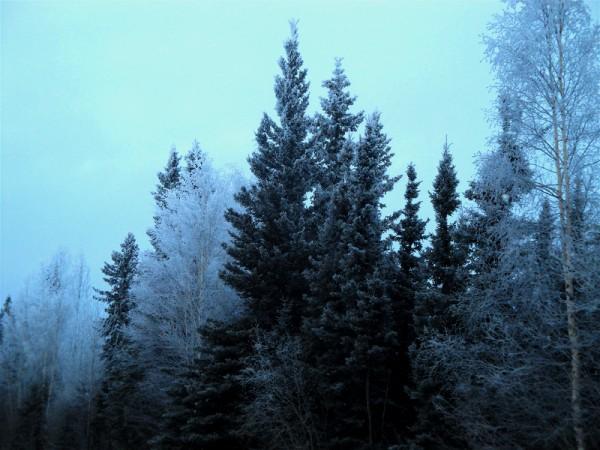 1216=Cold day103.jpg