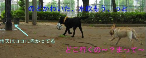 広場に.jpg