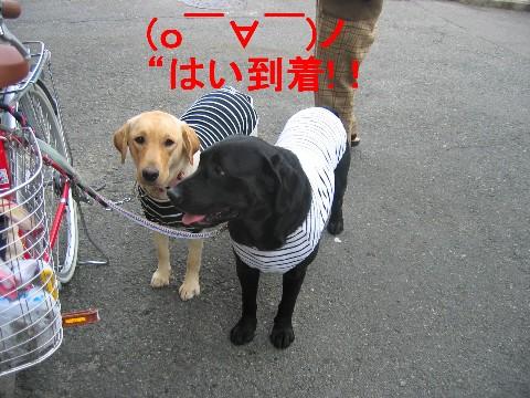 画像 264 Web 表示用 (中).jpg