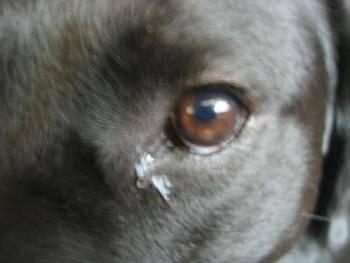 涙2.jpg