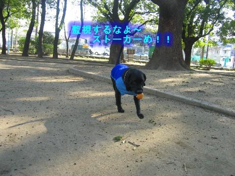 画像 341 Web 表示用 (中).jpg