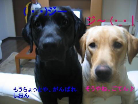 画像 048 Web 表示用 (中).jpg
