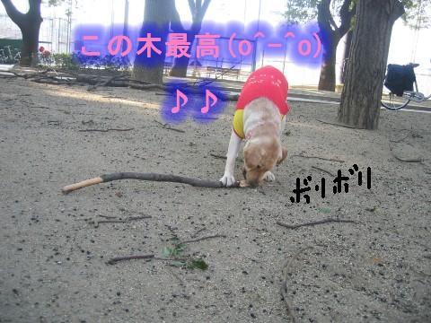 画像 354 Web 表示用 (中).jpg
