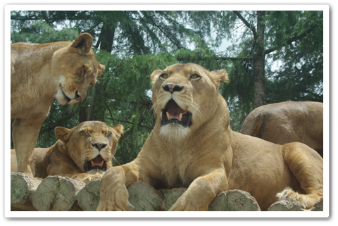 safari_001.jpg