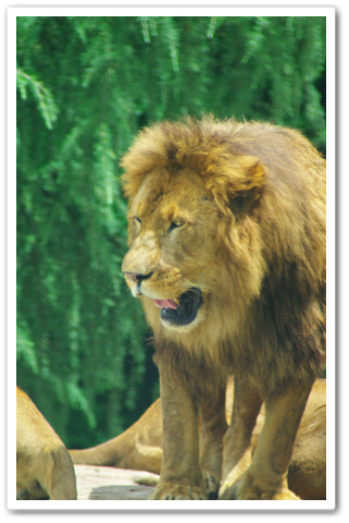 safari_006.jpg