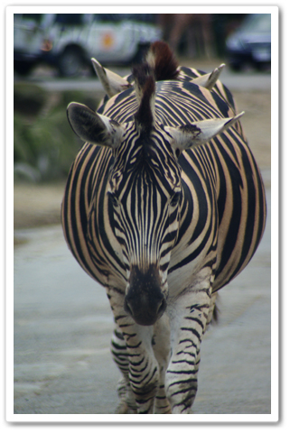 safari_004.jpg