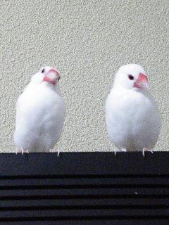 レハちゃん&ウメちゃんペア
