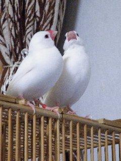 セバちゃん&ジゲンちゃんペア