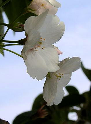 名残りの花