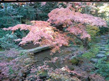 廣誠院の庭3