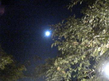 大覚寺:観月の夕べ