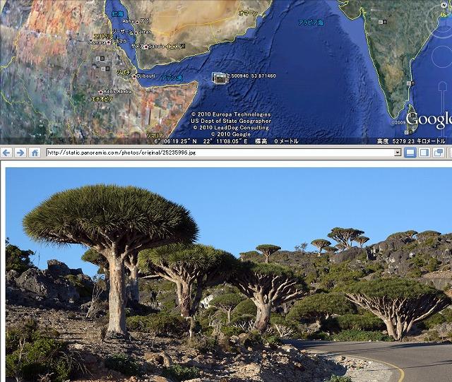 ソコトラ島の画像 p1_37
