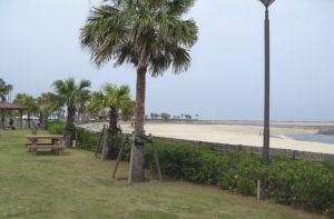 フェニックスビーチ