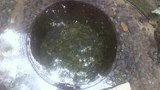 加藤清正公の井戸