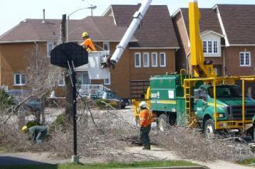 街路樹撤去