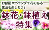 20100611_garden_pot_165x100.jpg