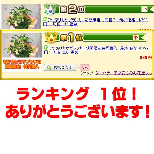 yokokawa-wca-06-1.jpg