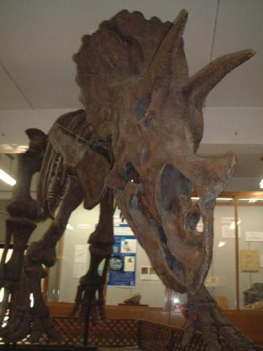 三重県立博物館の化石