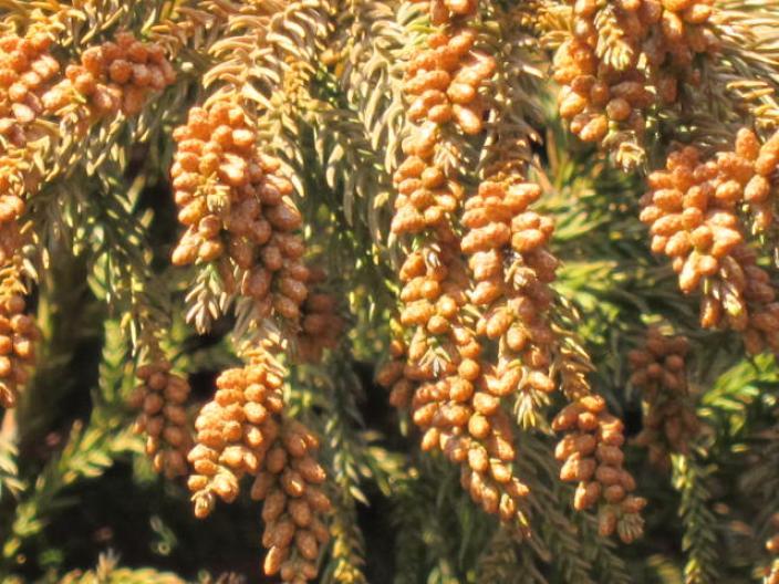 餭 スギ花粉の季節 風に吹かれて。。。 そろそろ花粉症の季節になってきまきま... 春は杉花粉の