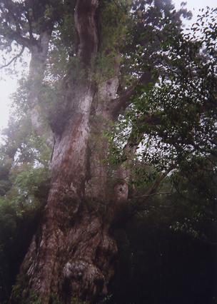 縄文杉3.JPG