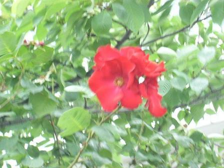 風にゆれる花.JPG
