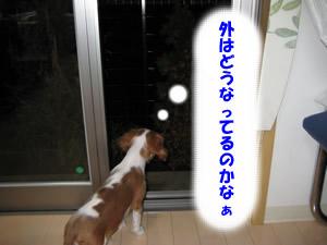 窓辺1.jpg